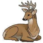 White-Tailed Stag